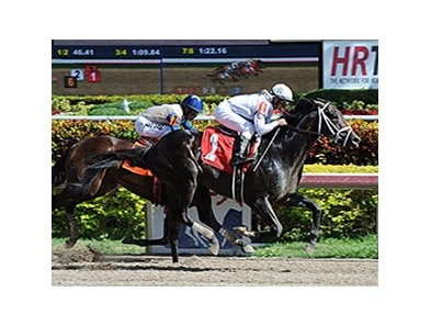 "Revolutionary returns a winner at Gulfstream Park.<br><a target=""blank"" href=""http://photos.bloodhorse.com/AtTheRaces-1/At-the-Races-2014/35724761_2vdnSX#!i=3017195222&k=pQ6cbKB"">Order This Photo</a>"