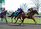 "Judy the Beauty won the Madison Stakes at seven furlongs on April 12.<br><a target=""blank"" href=""http://photos.bloodhorse.com/AtTheRaces-1/At-the-Races-2014/35724761_2vdnSX#!i=3175797311&k=wC6dF8v"">Order This Photo</a>"