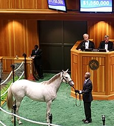 Tapit Fillies Steal Show at F-T Saratoga Sale