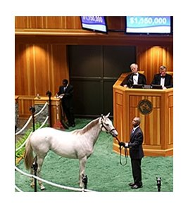 Hip 81 by Tapit was the sale topper, selling for $1.15 million.
