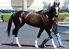 "Honor Code<br><a target=""blank"" href=""http://photos.bloodhorse.com/AtTheRaces-1/At-the-Races-2014/35724761_2vdnSX#!i=3116002048&k=HGN4SJT"">Order This Photo</a>"