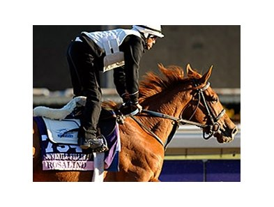 "Rosalind at Santa Anita on October 31. <br><a target=""blank"" href=""http://photos.bloodhorse.com/BreedersCup/2013-Breeders-Cup/Breeders-Cup/32986083_QMHXWK#!i=2873933616&k=mmd3Jgr"">Order This Photo</a>"