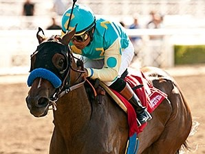 Jojo Warrior won the 2014 Summertime Oaks.