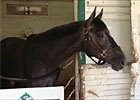 Frac Daddy at Belmont Park