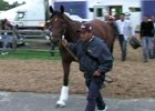 Preakness:  Big Brown Arrives at Pimlico