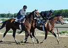 "Matterhorn (inside) and Commissioner jogged at Belmont Park on June 1, 2014. <br><a target=""blank"" href=""http://photos.bloodhorse.com/TripleCrown/2014-Triple-Crown/Belmont-Stakes-146/i-Xkd4LDQ"">Order This Photo</a>"