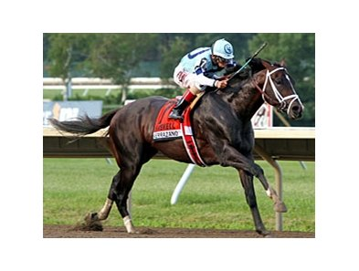 "Verrazano<br><a target=""blank"" href=""http://photos.bloodhorse.com/AtTheRaces-1/at-the-races-2013/27257665_QgCqdh#!i=2662607607&k=TtdLnd4"">Order This Photo</a>"