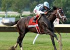 Full Field Awaits Verrazano in BC Dirt Mile