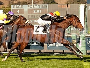 Enterprising won the Eddie Logan Stakes on the turf on December 28.