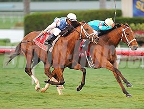 Mr. Online won the El Prado Stakes Dec. 28 on yielding turf at Gulfstream.