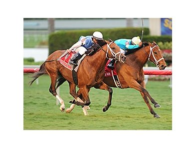 "Mr. Online won the El Prado Stakes Dec. 28 on yielding turf at Gulfstream.<br><a target=""blank"" href=""http://photos.bloodhorse.com/AtTheRaces-1/at-the-races-2013/27257665_QgCqdh#!i=2993325428&k=qFGxpg2"">Order This Photo</a>"