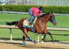 "Hoppertunity <br><a target=""blank"" href=""http://photos.bloodhorse.com/TripleCrown/2014-Triple-Crown/Kentucky-Derby-Workouts/i-Lvf7D2z"">Order This Photo</a>"