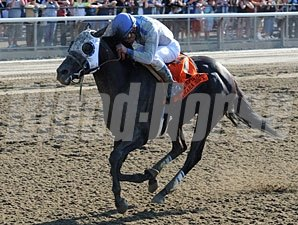Sahara Sky won the 2013 Metropolitan Handicap.