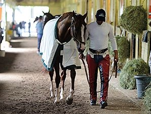 California Chrome Gallops at Belmont Park