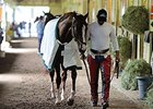 "California Chrome walks after his gallop on May 22.<br><a target=""blank"" href=""http://photos.bloodhorse.com/TripleCrown/2014-Triple-Crown/Belmont-Stakes-146/i-CkS4NdV"">Order This Photo</a>"