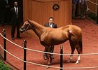 Bedford Land, Hip 414, sold for $1,075,000 at the Fasig-Tipton Kentucky July Sale.