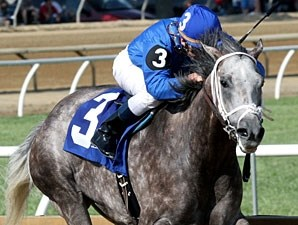 Taptowne won the 2013 West Virginia Governor's Stakes.