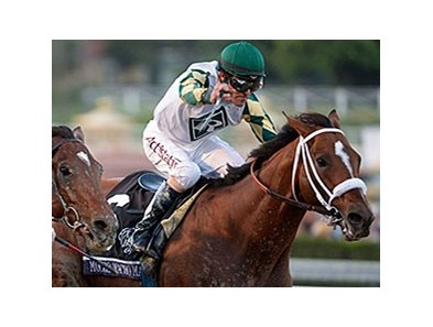 "Mucho Macho Man <br><a target=""blank"" href=""http://photos.bloodhorse.com/BreedersCup/2013-Breeders-Cup/Classic/33150031_7ZnLk4#!i=2886417473&k=GZpq2gT"">Order This Photo</a>"