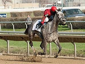 Flashy American won the 2014 Sixty Sails Handicap.