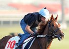 British Stayer Red Cadeaux Euthanized
