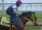 Wildcat Red Breezes, All Set for Next Start