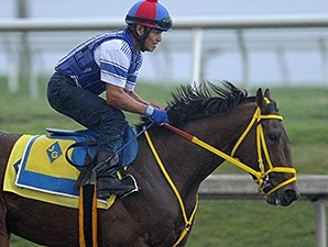 Wildcat Red breezes June 22 at Gulfstream Park.