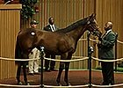 Keeneland Sept. Yearling Sale: Hip 589 in the Ring