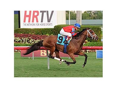Viva Rafaela won an allowance/optional claiming race at Gulfstream Park on November 11.