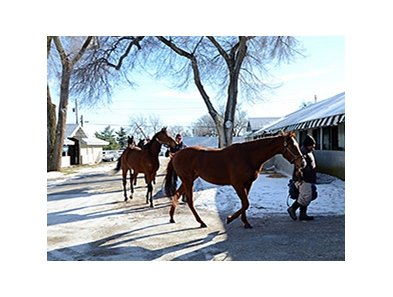 The Keeneland January Sale
