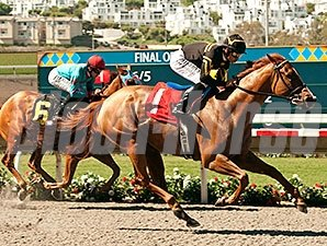 Judy the Beauty won the 2014 Rancho Bernardo Handicap.