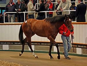 European Record At Tattersalls Craven Sale