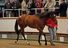 Lot 44, a High Chaparral colt, brought 800,000 guineas.