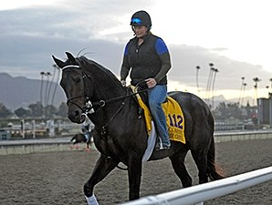 Ron the Greek at the 2013 Breeders' Cup.
