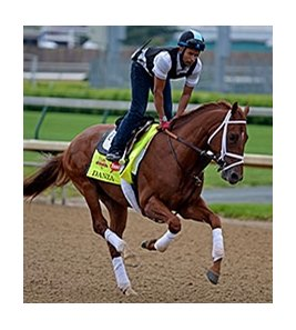 "Danza at Churchill Downs, April 25, 2014. <br><a target=""blank""http://photos.bloodhorse.com/TripleCrown/2014-Triple-Crown/Kentucky-Derby-Workouts/i-S8KqR4g"">Order This Photo</a>"