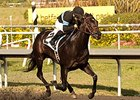 Shared Belief Works, Pointing for Lewis