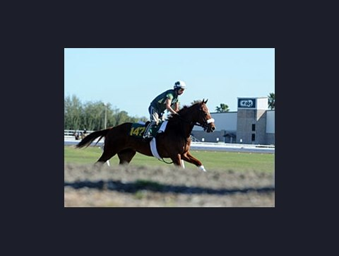 94c0f3a94d9 OBS March Session 2  Horses to Watch - BloodHorse
