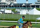 "Wildcat Red <br><a target=""blank""http://photos.bloodhorse.com/TripleCrown/2014-Triple-Crown/Kentucky-Derby-Workouts/i-PgLqKFN"">Order This Photo</a>"