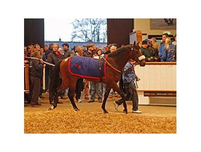 Lot 119, a 2-year-old War Front colt sold for 1,150,000 guineas on April 17.