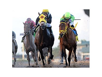 Wildcat Red, shown winning the Fountain of Youth Stakes, is nominated to the Toyota Blue Grass Stakes.