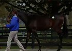 F-T October Yearling Sale Recap Day 1