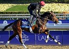 "Mexikoma <br><a target=""blank"" href=""http://photos.bloodhorse.com/BreedersCup/2013-Breeders-Cup/Breeders-Cup/32986083_QMHXWK#!i=2871567307&k=ZT8sgBs"">Order This Photo</a>"