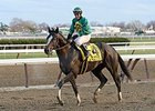 "Honor Code<br><a target=""blank"" href=""http://photos.bloodhorse.com/AtTheRaces-1/at-the-races-2013/27257665_QgCqdh#!i=2940293938&k=3tRqP9c"">Order This Photo</a>"