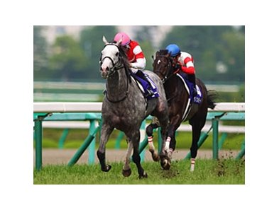 "Gold Ship won last year's Takarazuka Kinen by 3 1/2 lengths.<br><a target=""blank"" href=""http://photos.bloodhorse.com/AtTheRaces-1/at-the-races-2013/27257665_QgCqdh#!i=2594459195&k=qPtKKjw"">Order This Photo</a>"