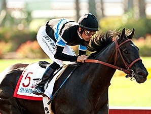 Champ Shared Belief Cruises in Los Al Derby