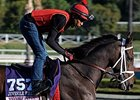My Conquestadory prepping for the 2013 Breeders' Cup.