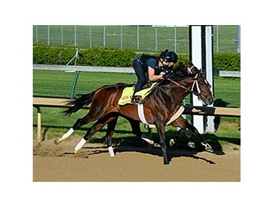 "Commanding Curve breezed five furlongs at Churchill Downs on April 26, 2014. <br><a target=""blank"" href=""http://photos.bloodhorse.com/TripleCrown/2014-Triple-Crown/Kentucky-Derby-Workouts/i-gJHhjZC"">Order This Photo</a>"