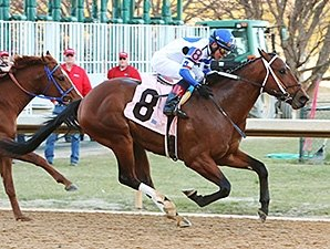Tanzanite Cat Handy Winner of Smarty Jones