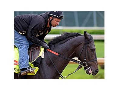 "Dance With Fate <br><a target=""blank""http://photos.bloodhorse.com/TripleCrown/2014-Triple-Crown/Kentucky-Derby-Workouts/i-dSWhqMC"">Order This Photo</a>"
