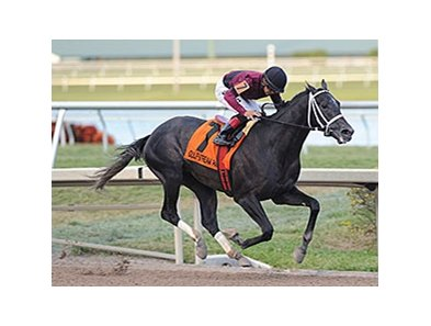 "Cairo Prince<br><a target=""blank"" href=""http://photos.bloodhorse.com/AtTheRaces-1/At-the-Races-2014/35724761_2vdnSX#!i=3041742429&k=JkPDNnj"">Order This Photo</a>"