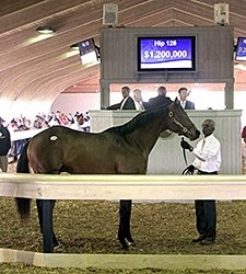 Two Bring Seven Figures at F-T Florida Sale